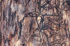 Natures-abstract-bark