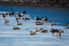 Collins Lake Scotia NY.jpg