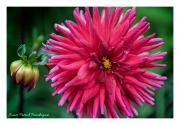 Bridge-of-flowers-6