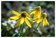 Yellow-flowers-at-Landris