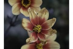 Bridge-of-flowers-1