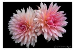 Bridge-of-flowers-3