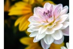 Bridge-of-flowers-5