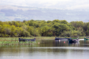 ross castle lake with boats 4.jpg