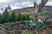 Bike-on-Tree-Indian-Ladder